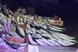 (Özel) Tezgahta kilosu 10 liraya balık var alan yok