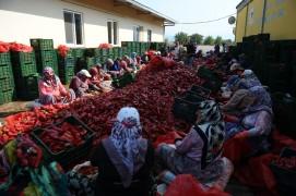 Salça diyarı Kulaca'dan biber salçası ihracatı